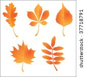 autumn orange leaves vector... | Shutterstock .eps vector #37718791