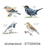 hand drawn collection of... | Shutterstock . vector #377204536