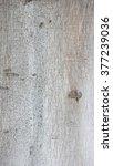 Small photo of grey birch tree