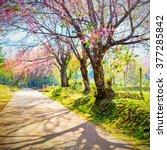 Spring Cherry Blossom Path...