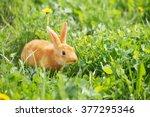 Red Little Rabbit Outdoor