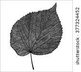 vector skeletonized leaf on a... | Shutterstock .eps vector #377324452
