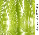 fresh green palm leaf with... | Shutterstock . vector #37733413