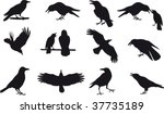 crow vector | Shutterstock .eps vector #37735189