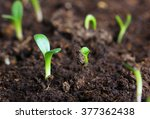 small green seedling in the... | Shutterstock . vector #377362438