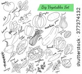hand drawn big vegetables set.... | Shutterstock .eps vector #377374132