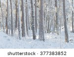 A Forest Of Pine Trees Covered...
