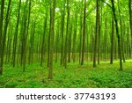 trees | Shutterstock . vector #37743193