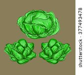cabbage. vector illustration. | Shutterstock .eps vector #377493478