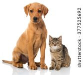 Stock photo cat and dog 377525692