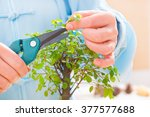 Woman wearing traditional chinese uniform trimming bonsai tree - stock photo