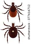vector illustration of two... | Shutterstock .eps vector #377616712