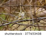 india has many lizards that... | Shutterstock . vector #377653438