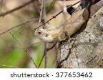 india has many lizards that... | Shutterstock . vector #377653462