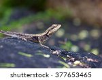 india has many lizards that... | Shutterstock . vector #377653465