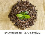 Young Sprout Of Coffee Tree In...