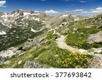 Arapaho Glacier Trail Crosses the Continental Divide High in the Colorado Rocky Mountains with Summer Wildflowers Blooming on the Tundra