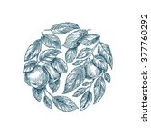apple tree background. apple... | Shutterstock .eps vector #377760292