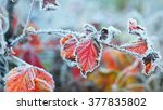 Frozen Plants In Winter With...