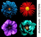 Small photo of Set of 4 in 1 surreal flowers: red chrysanthemum, violet Althea, blue dahila and cyan peony isolated on black