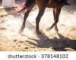 Legs Horse Running In Twilight...