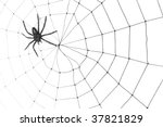 spider web for background use   Shutterstock . vector #37821829