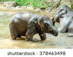 Elephant Bath In Maerim Chaing...