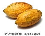 two fresh cacao pods isolated... | Shutterstock . vector #378581506