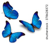 Beautiful Three Blue Butterfly...