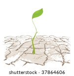 A Small Sprout Plants From The...