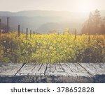 Vineyard In Spring With Vintage ...