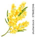 acacia flower symbol of womens... | Shutterstock .eps vector #378682246
