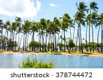 Palm Forest Growing By The...