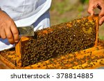 Beekeeper Holding Frame Of...