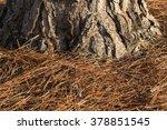 Brown Long Pine Needles...