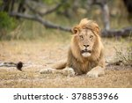 african male lion portrait in... | Shutterstock . vector #378853966