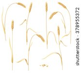 wheat ears set and grains... | Shutterstock .eps vector #378955372