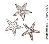 starfish set on a white... | Shutterstock .eps vector #378974572