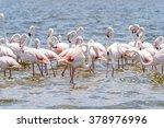 flamingo in the ocean | Shutterstock . vector #378976996