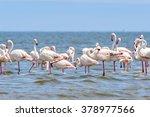 flamingo | Shutterstock . vector #378977566