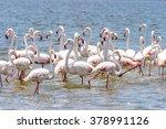 flamingo in the ocean | Shutterstock . vector #378991126