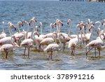 flamingo in the ocean | Shutterstock . vector #378991216
