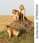Kenya  Africa  Masai Mara...
