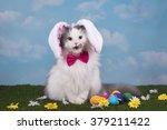 Cat In The Suit Bunny...