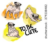 to be cute. pug dog. isolated... | Shutterstock .eps vector #379238482