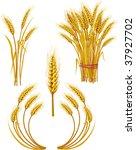 wheat | Shutterstock .eps vector #37927702