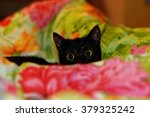 Funny And Curious Black Cat In...