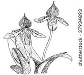 orchid black and white | Shutterstock .eps vector #37934893