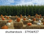 Pumpkins On Bales Of Hay With...