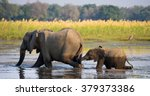 elephant with baby crossing the ...   Shutterstock . vector #379373386